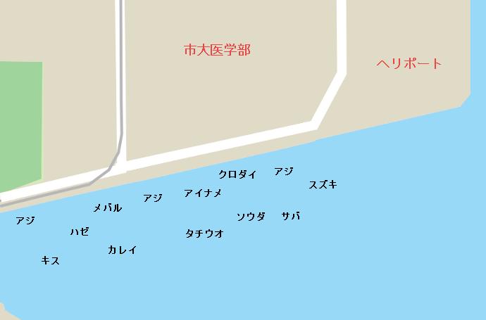 金沢三号埋立地(八景島前)のポイント